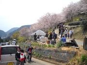 桜まつり到着.jpg