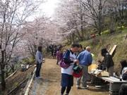 桜野桜まつり.jpg