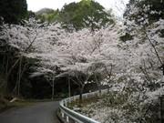 桜野入り口2.jpg