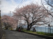 由比旧東海道2.jpg
