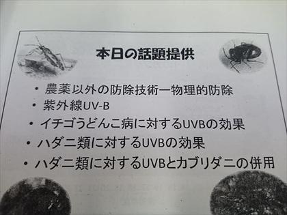 いちごIPM.jpg