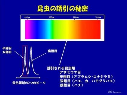 コナジラミ対策.jpg